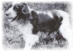 první pes v cechach